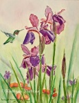 Wild Iris Nectar - Hummingbird and Iris