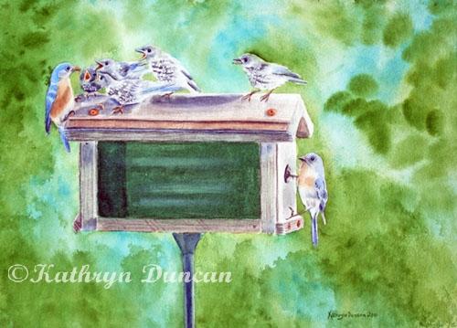 Baby Blues - Eastern Bluebird Family on Feeder