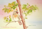 Spring Blossoms II - Cardinal