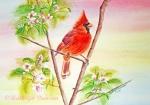 Spring blossoms - Cardinal
