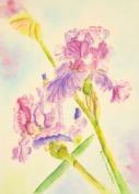 """""""Violet Irises"""""""