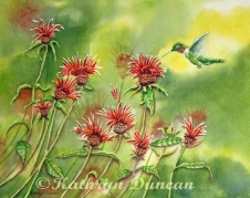 Hummingbird In Beebalm