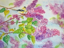 """Summertime Arrival II"" Goldfinch & Lilacs"
