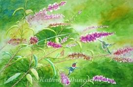 Mighty Wings - Hummingbirds