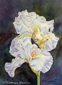 Blue Velvet - Irises