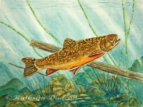 """""""Brook Trout"""""""