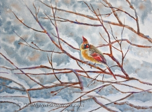 """""""Lady In Waiting"""" - Cardinal"""